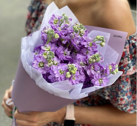 Bouquet of flowers from lilac matthiola