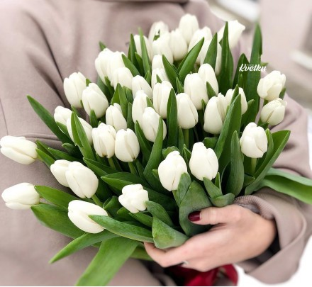 White tulips - from 15 pcs