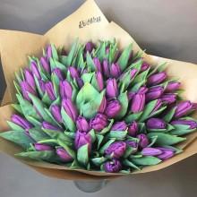 Raspberry tulips
