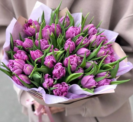 Peony Purple Tulips Double Price