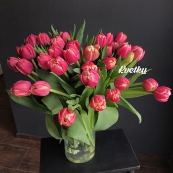 Columbus peony tulips - 1 piece