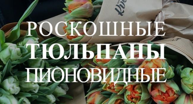 пионовидные тюльпаны купить в Минске