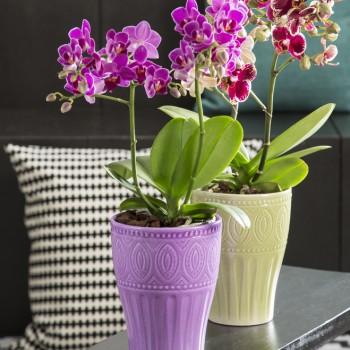 Кашпо для орхидеи Scheurich (керамика), D17см, сиреневый
